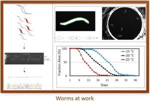 Image of worms at work